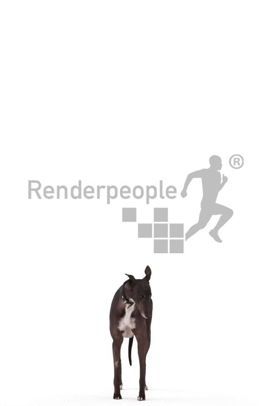 Posed 3D Dog model for renderings – spanich g