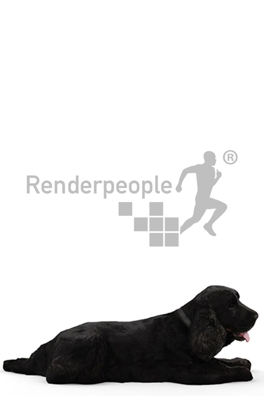 3d pets, black 3d dog lying on floor