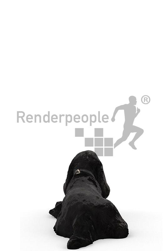 3d pets, black 3d dog lying on floor